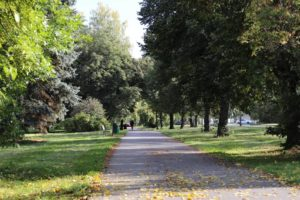 beautiful-view-sidewalk-surrounded-by-tall-trees-grass-covered-fields-min